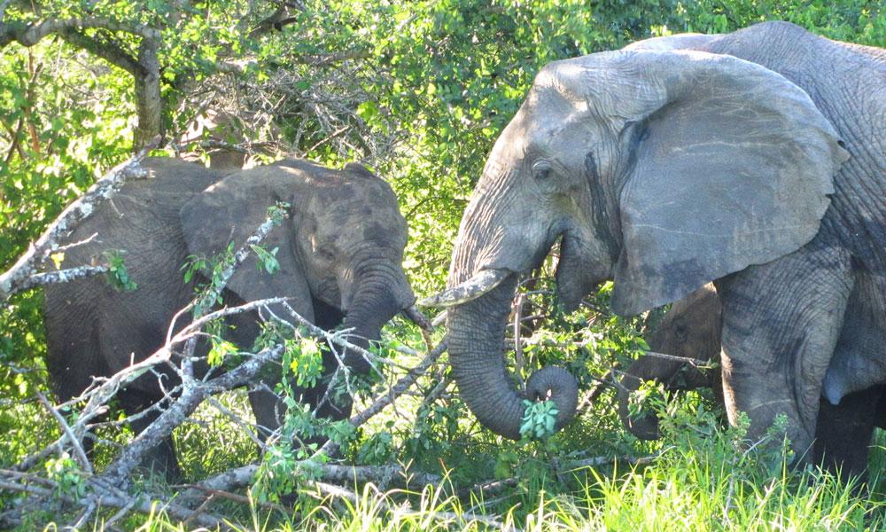 sud africa event planet group incentive travel dettaglio elefanti nella riserva nazionale